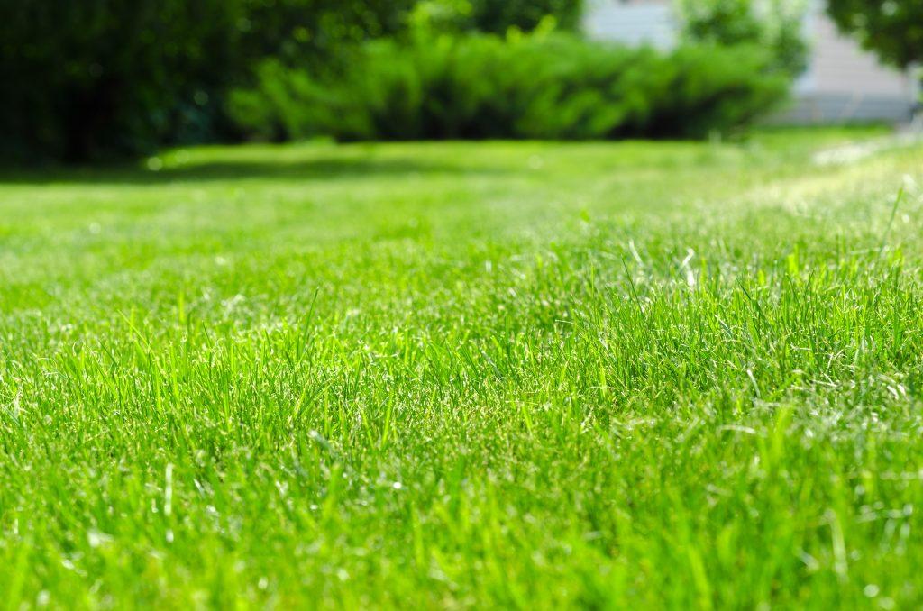 Get your garden property market ready