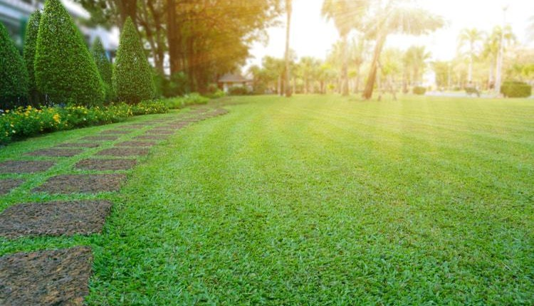 Everything You Need to Know About Your Lawn